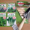 【家庭菜園1】初心者がマイホームで屋上菜園はじめます!